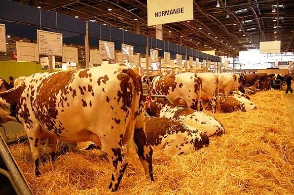 Veaux vaches cochons et autres couv es j 39 aime mon for Vache salon de l agriculture
